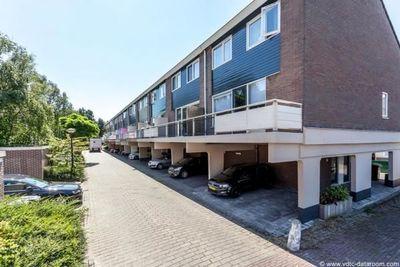 Poolster, Hoorn