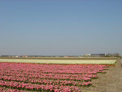 Torenlaan 5-B, Voorhout