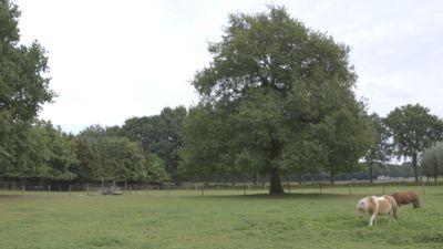 Ooijenseweg 0-ong, Blitterswijck