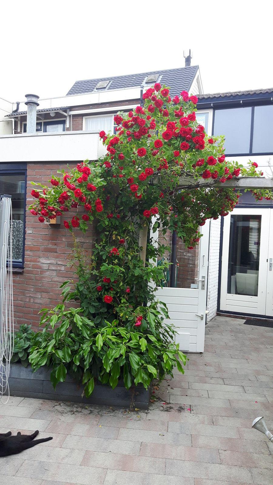 Vlamingstraat 40, Den Helder