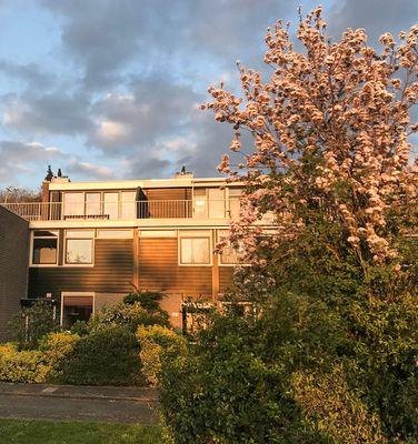 Wilgendreef, Voorburg