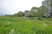 Isabellaland, Den Haag