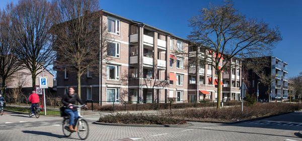Kamperfoeliestraat - only seniors 55+ years, Oss