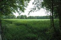Sterrekamp 0ong, Nieuwehorne