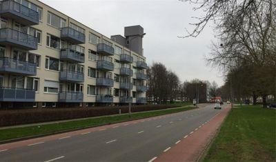 Florijnruwe, Maastricht