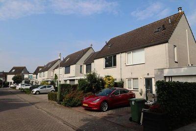 Papegaai, Breda