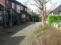 Houtduif, Nieuwegein