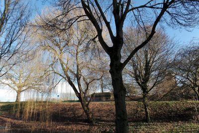 Paddemoes, Gorinchem