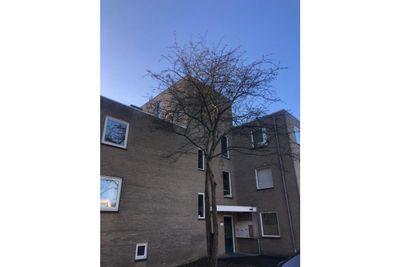 Archipel 34, Lelystad