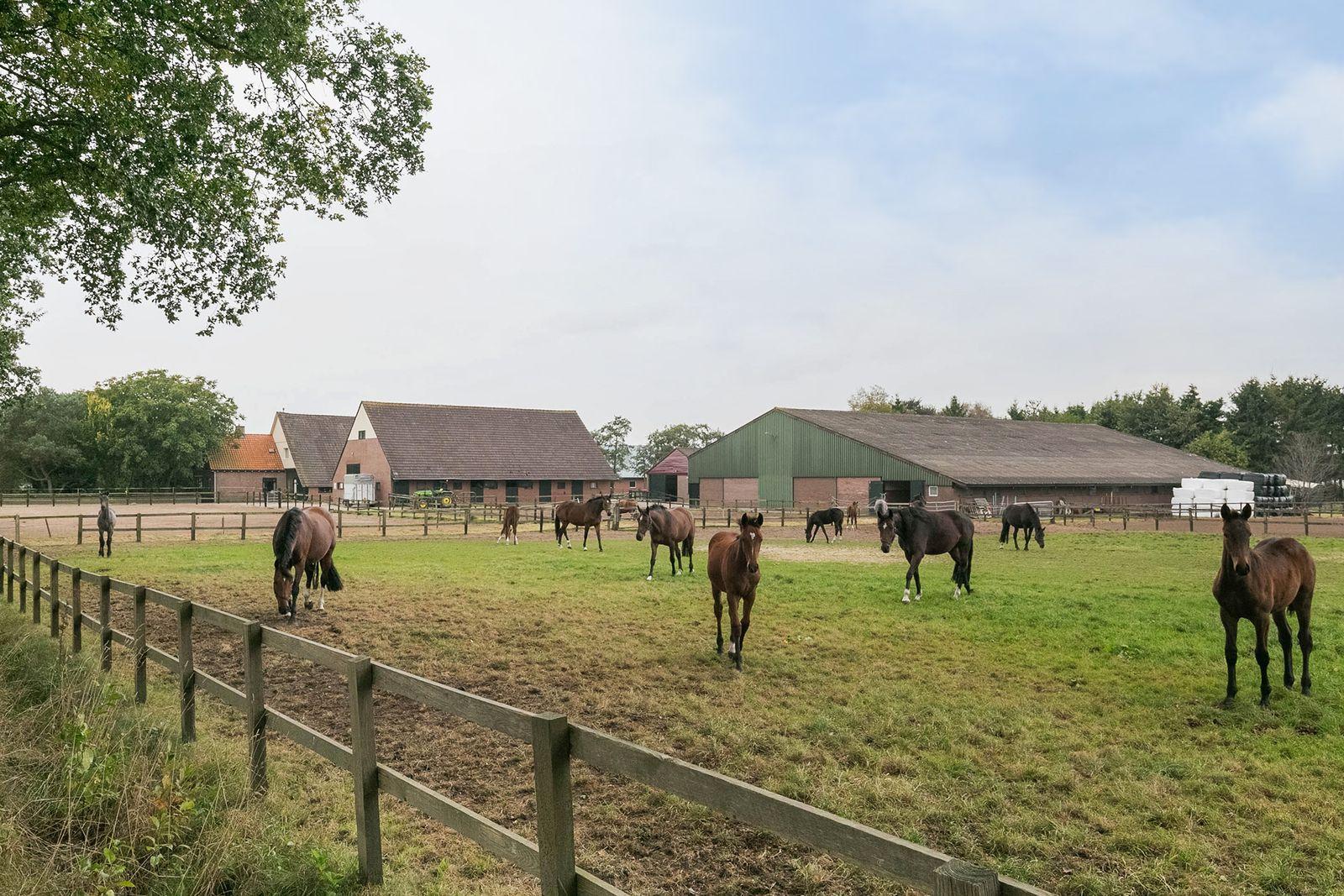 Hendrik Reindersweg 11, Pesse