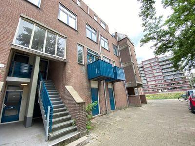 Buizenwerf, Rotterdam