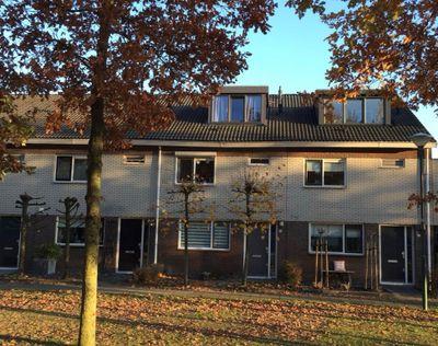 Honingzwam, Veenendaal