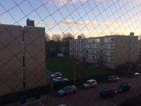 Parelmoerhorst, Den Haag