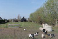 Midden 110*, Wapserveen