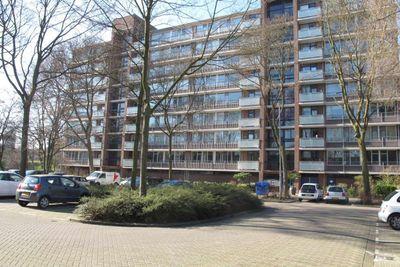 Kaneelhof 69, Hoogvliet Rotterdam