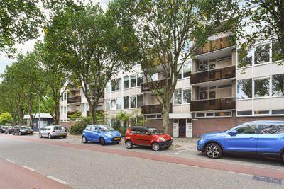 Terborchlaan, Alkmaar