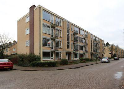 Colenso, Soest