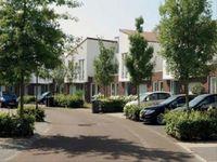 Strandkrab -, Bergen Op Zoom